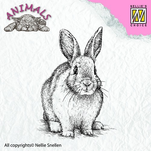 Animal Rabbit