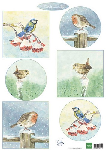 Tiny`s birds in winter